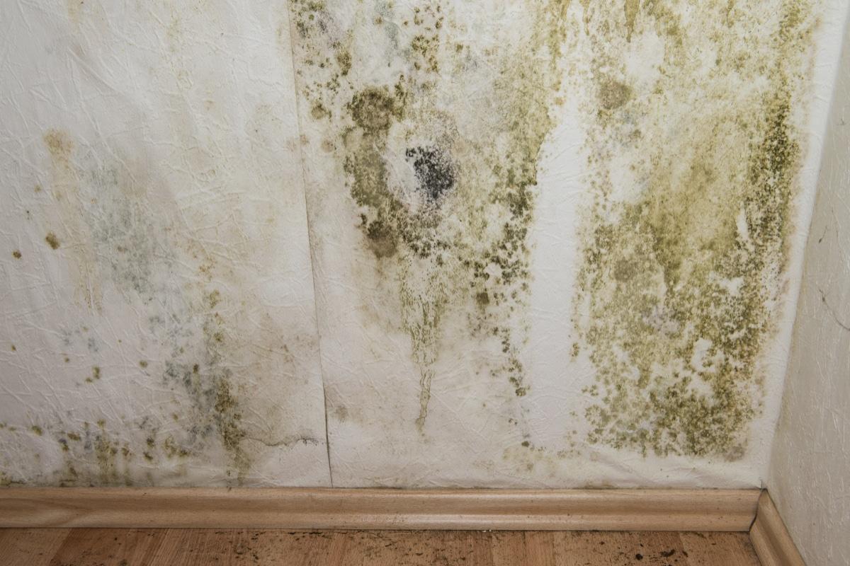 Moisissure sur le mur : Causes, solutions et comment l'enlever